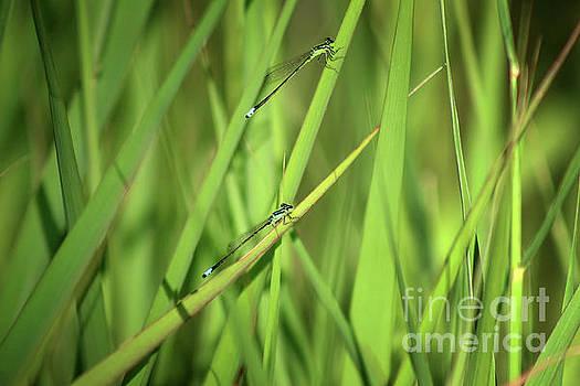 Two Damsels in the Grass by Karen Adams