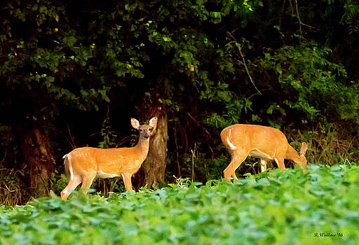 Two Doe by Brian Wallace
