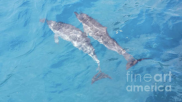 Two Dolphins by Karen Nicholson