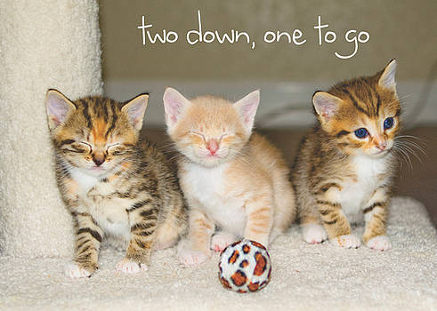 Two Down One To Go by Debbie Karnes