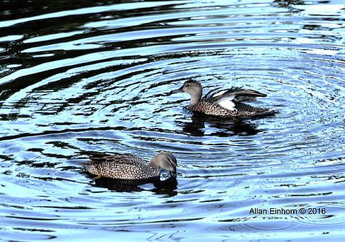 Two Ducks in Water by Allan Einhorn