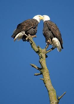 Two eagles Beek by Brent Easley
