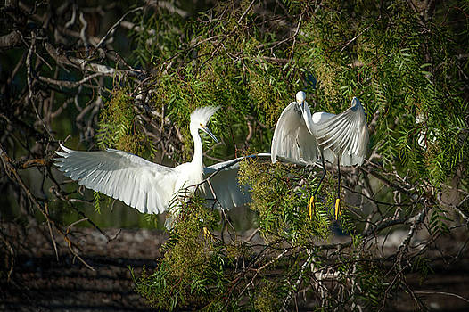 Two Egrets by Catherine Lau