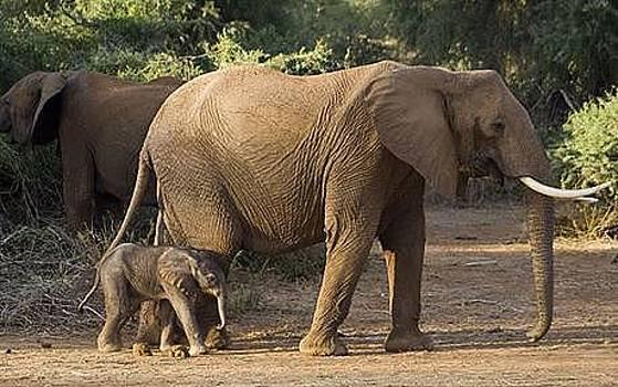 Two Elephants by Siddarth Rai
