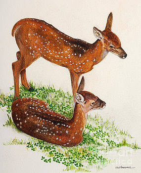 Two Fawns by Monica Carrell