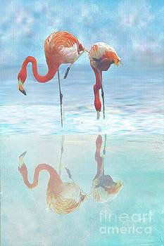 Two Flamingos Searching for Food by Janette Boyd