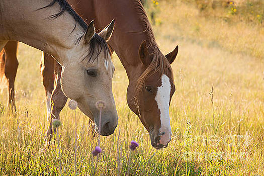 Two Friends by Terri Cage