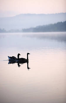 Two Geese On Lake With Fog And Forested by Gillham Studios