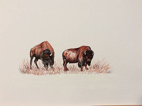 Two Grumpy Bisons  by Ellen Canfield