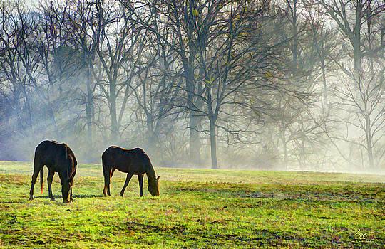 Sam Davis Johnson - Two Horse Morning