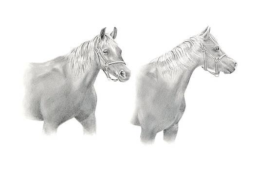 Two Horse Study by Elizabeth Lock