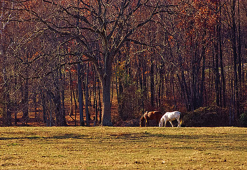 Two Horses Grazing, Bascule Farm, Poolesville, Maryland, Autumn 2001 by James Oppenheim