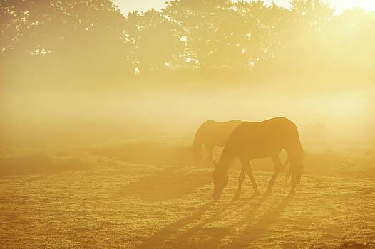 Jenny Rainbow - Two Horses in Foggy Field