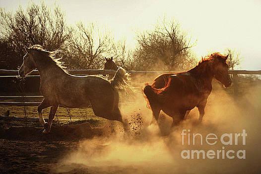 Dimitar Hristov - Two Horses Running In Paddock