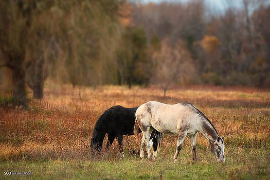 Two Horses by Scott Fracasso