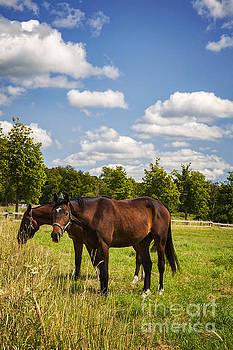 Sophie McAulay - Two horses
