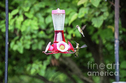 Two hummingbirds by Diane Friend