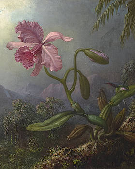 Two Hummingbirds with an Orchid-Detail by Martin Johnson Heade
