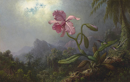 Two Hummingbirds with an Orchid by Martin Johnson Heade