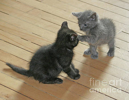 Two Kittens by PJ Boylan