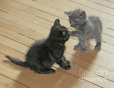 PJ Boylan - Two Kittens