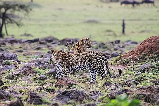 Mauverneen Blevins - Two Leopards