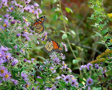 Edward Sobuta - Two Monarchs