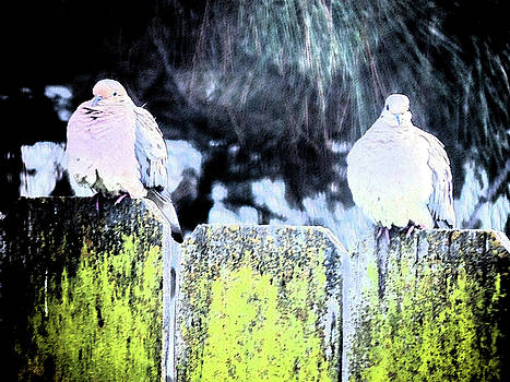 Two More Doves On A Fence by Eric Forster
