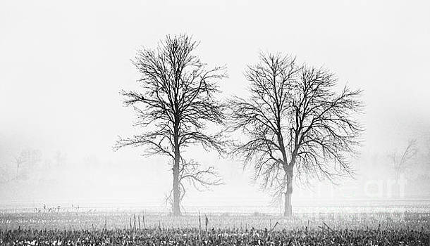 Two... by Nina Stavlund
