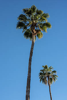 Two Palms by Steve Gadomski