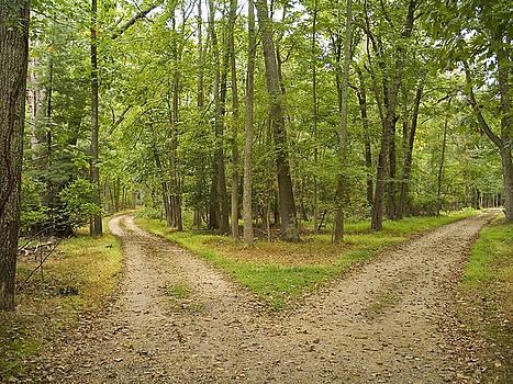 Two Paths by Andrew Kazmierski