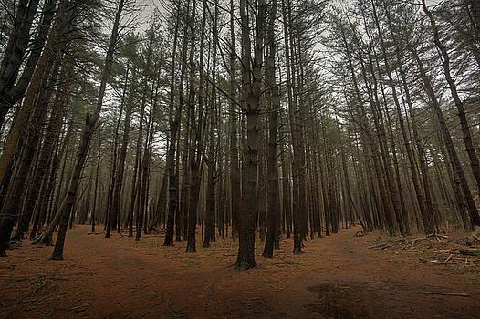 Two Paths by Steve Gravano