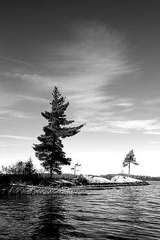Two Pines by David Hickey