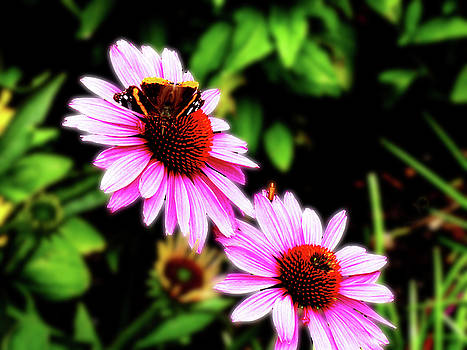 Two Pink Flowers and Butterfly by Alan Socolik