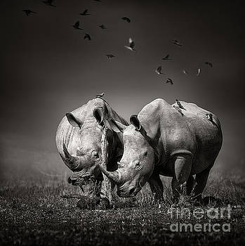 Two Rhinoceros with birds in BW by Johan Swanepoel