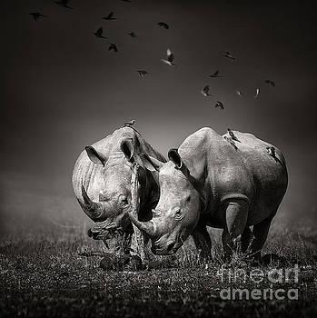 Two Rhinoceros with birds in BW by Johan Swanepoel