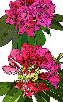 Two Rhododendrons by Jamie Downs