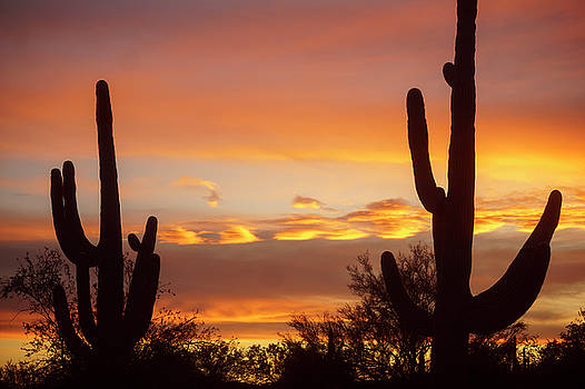 Two Saguaro Sunset by Ryan Seek