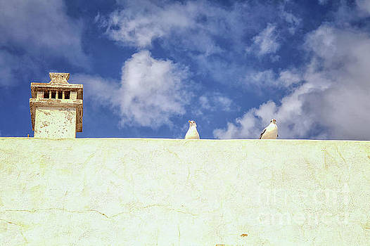 Two seagulls on a wall by Patricia Hofmeester