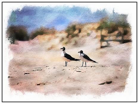 Two Seagulls by Scott Fracasso