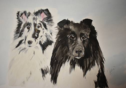 Two shelties by Susan Snow Voidets
