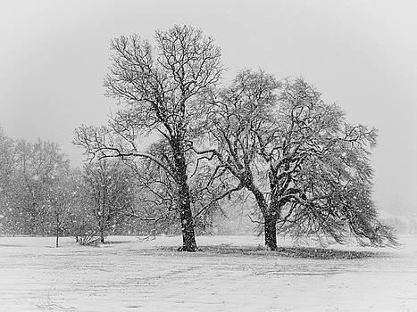 Louis Dallara - Two Sister Trees