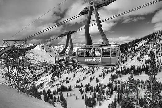 Adam Jewell - Two Snowird Trams Black And White