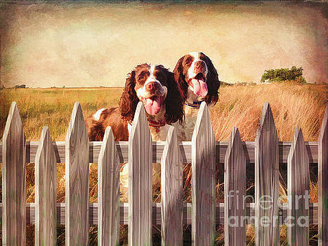 Two Spaniels Exploring  by L Wright