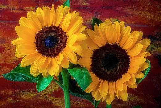 Two Special Sunflowers by Garry Gay