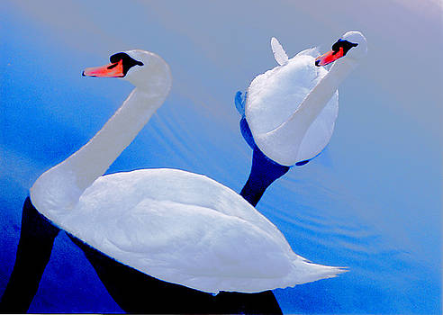 Two swans by Mary McGrath