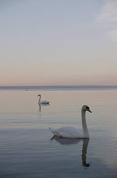 Two Swans by Stanislovas Kairys