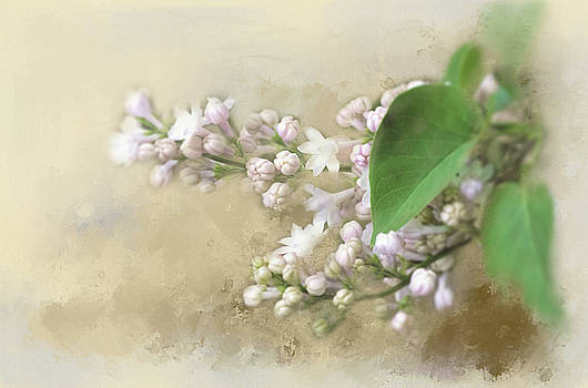 Two Tone Lilac by Lee Fortier