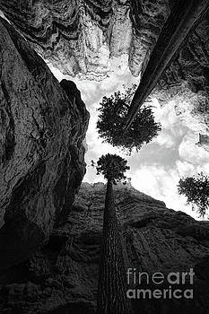 Chuck Kuhn - Two Trees Black Bryce