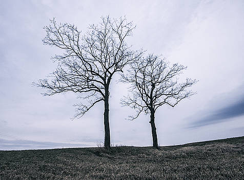 Two Trees In The Winter by Dylan Murphy